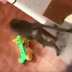 حرس الحدود يُنقذ طفلة من الغرق في ينبع
